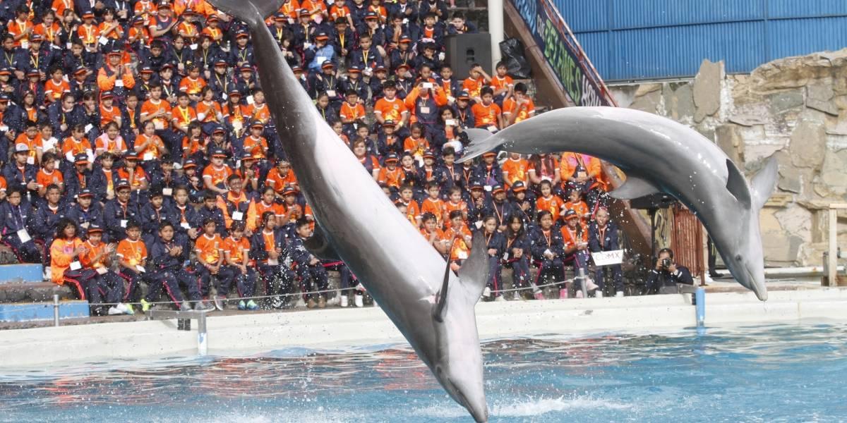 Prohíben espectáculos marinos en la Ciudad de México