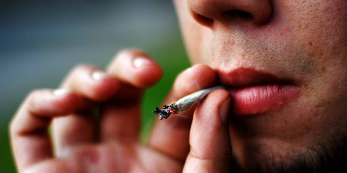 Inesperado descubrimiento: científicos chilenos concluyen que cannabis medicinal no sirve y enviarán carta al Congreso