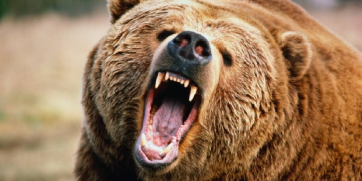 Taxista es asesinado por un oso
