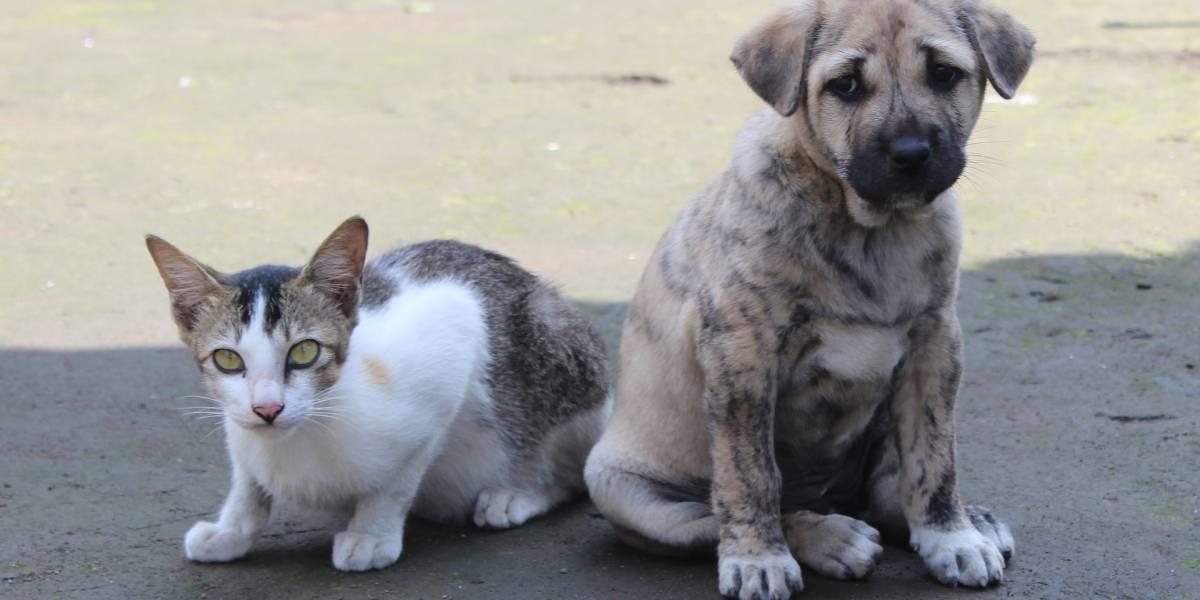 Projeto que obriga cães e gatos de SP a terem microchip é aprovado