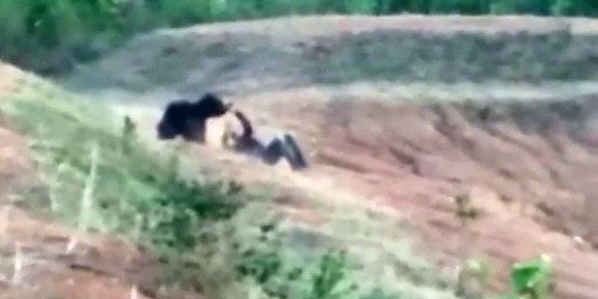 VÍDEO: homem morre ao tentar tirar selfie com urso