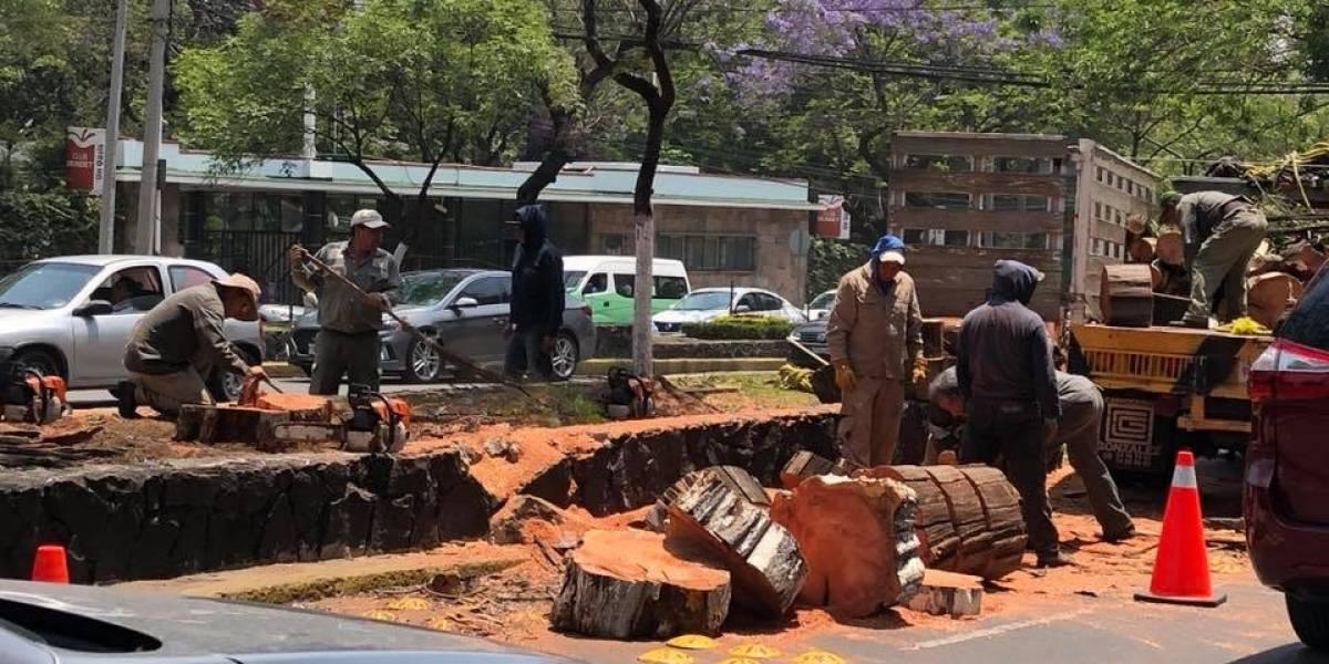 ¿Por qué están talando los árboles de la avenida Ejército Nacional?