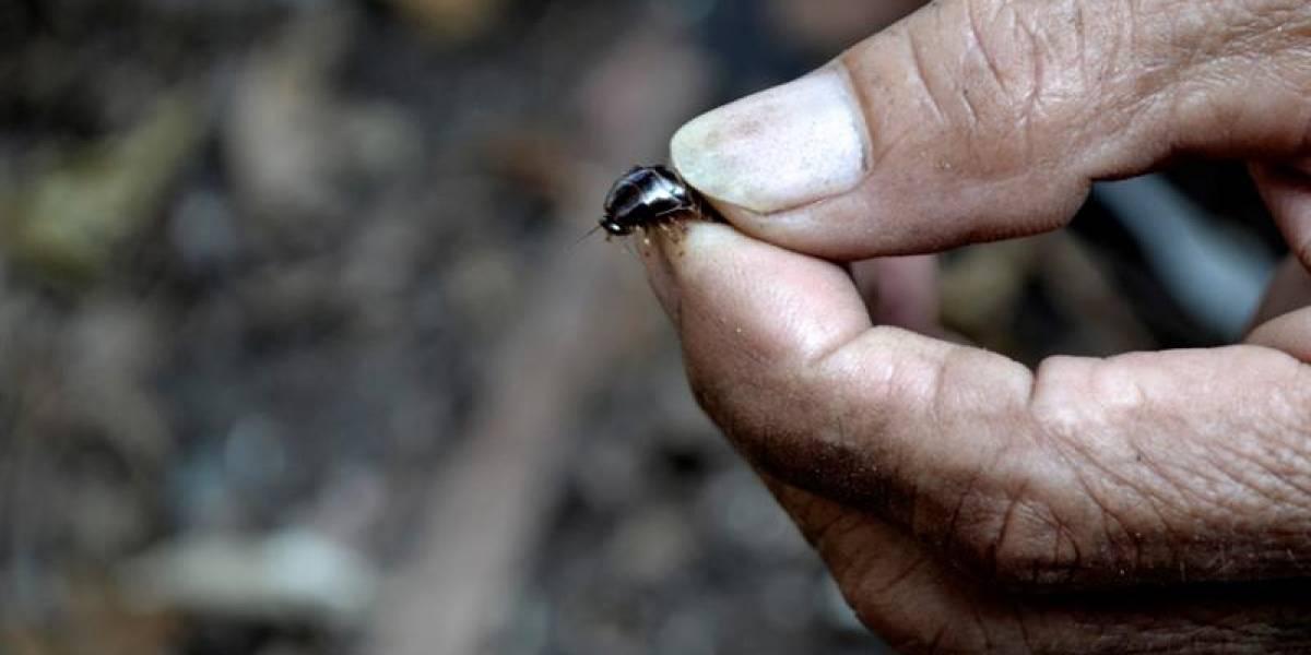 La peculiar historia del hombres que le debe su vida a las cucarachas