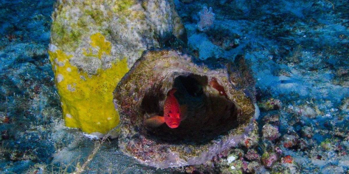 O gigantesco - e ainda misterioso - recife de corais encontrado na foz do rio Amazonas