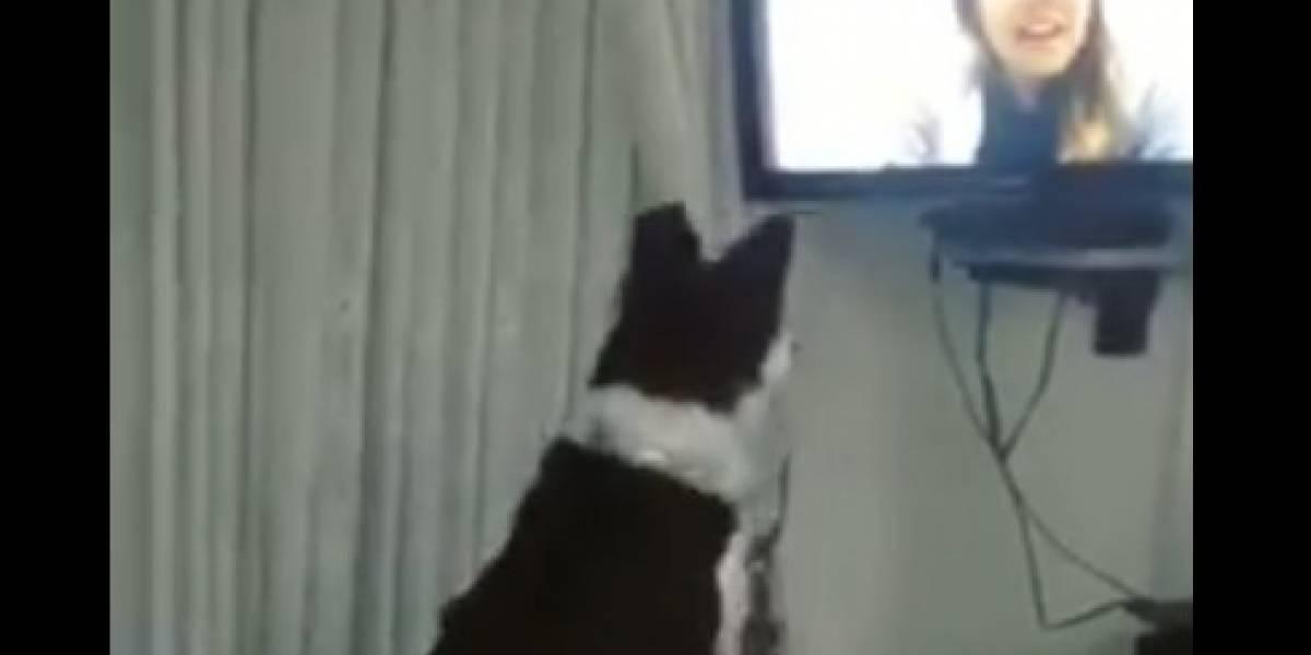 Perro recibe primera videollamada de su dueña en 9 meses y se vuelve viral