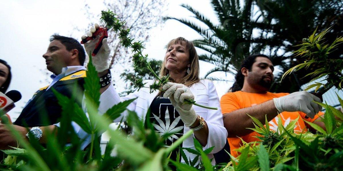 """Presidenta de Fundación Daya por estudio que desacredita beneficios de la cannabis: """"No sabemos cuáles son los oscuros intereses detrás de esto"""""""