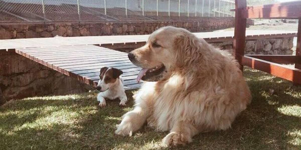 Agente é afastada por não ajudar Marcela Temer a salvar cachorro