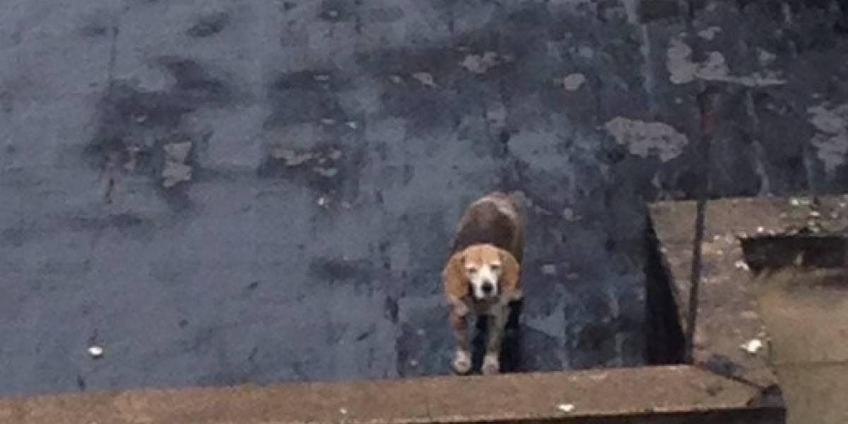 ¡Indignante! denuncian caso de maltrato contra una perrita en Bogotá