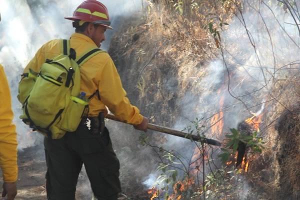 Jalisco, el estado con más hectáreas dañadas por incendios forestales
