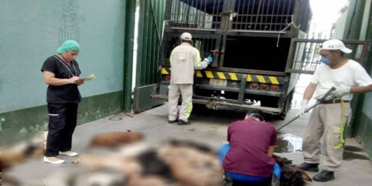Denuncian matanza masiva de perros y gatos en centro canino de Tláhuac