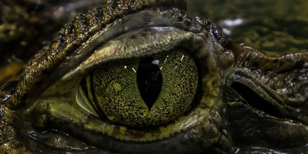 Video: Buscan en lago a adolescente que fue atacado por cocodrilo