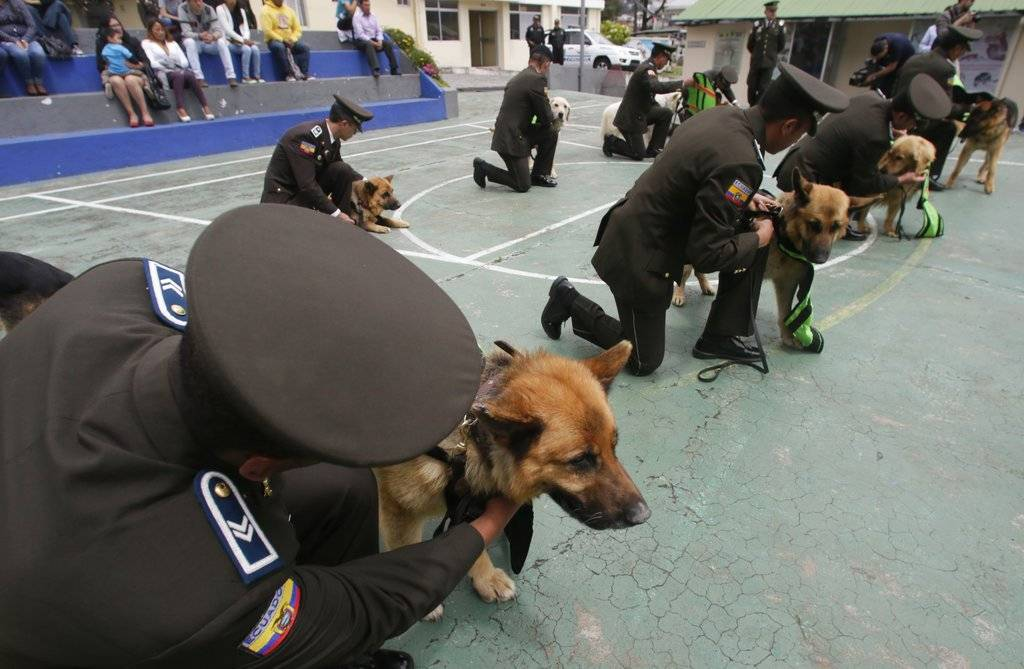 Perros ecuatorianos