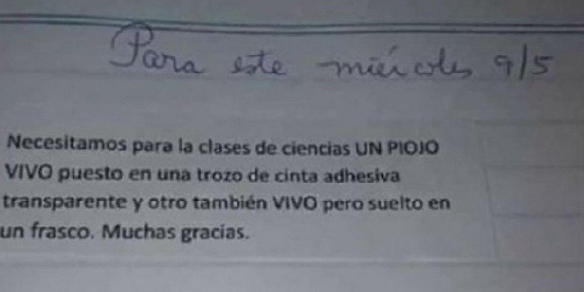 """""""Traer dos piojos vivos"""": la insólita y desagradable tarea que una profesora le dio a sus alumnos"""