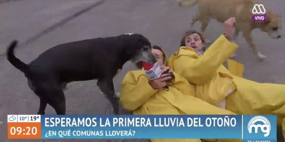"""""""Lanzazo en vivo"""": El particular y divertido """"robo"""" de un perro a Joaquín y Karol Lucero en """"Mucho Gusto"""""""