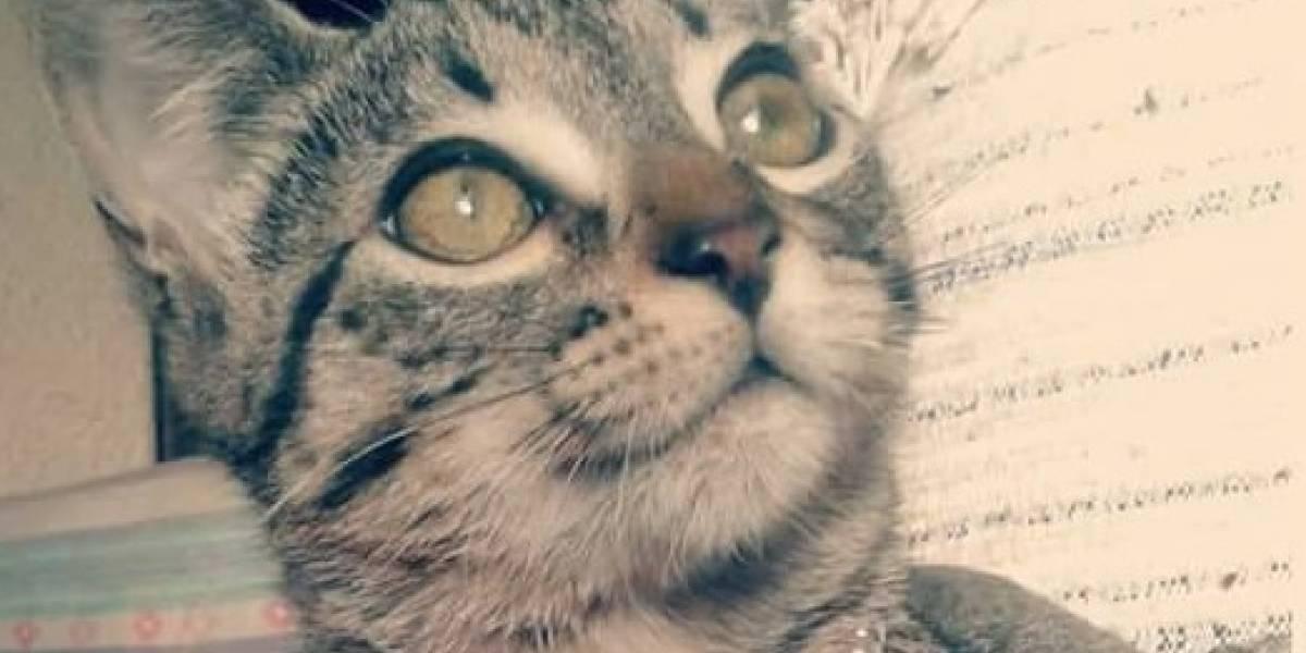 Milagros, la gatita de 4 meses asesinada por un hombre que su pareja abandonó en Bogotá