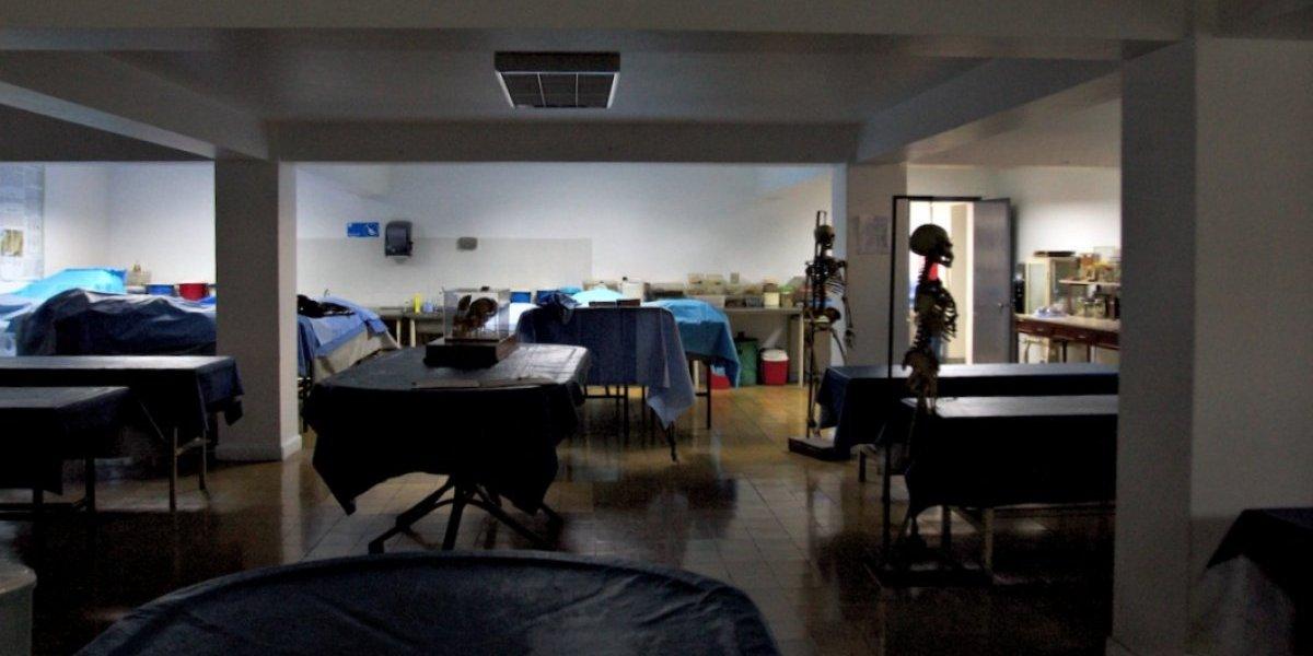 Desde donación hasta la compra en el extranjero: así se proveen de cadáveres los médicos en Chile