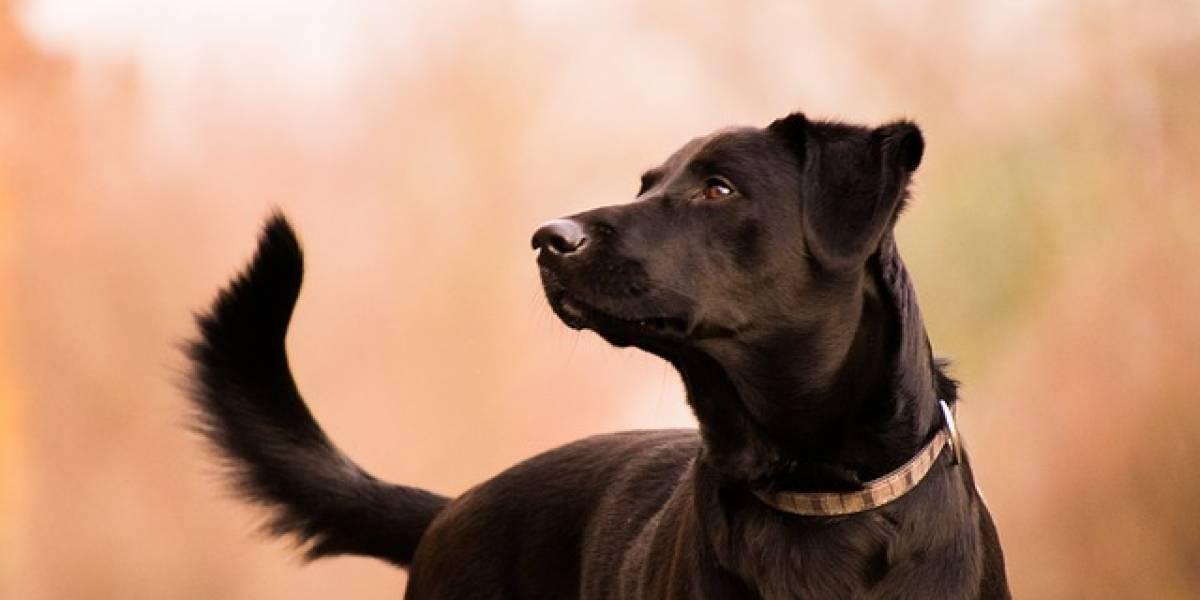 Hombre dice que su perro le disparó mientras jugaba con él