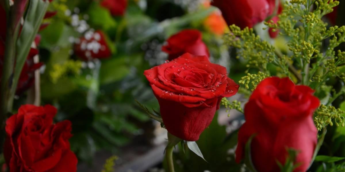 Las flores para la reina de la casa: mamá