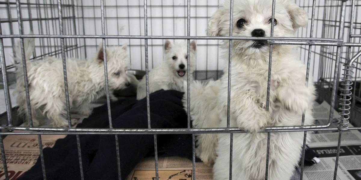 Comerciantes de animales en La Minorista piden a gritos la remodelación