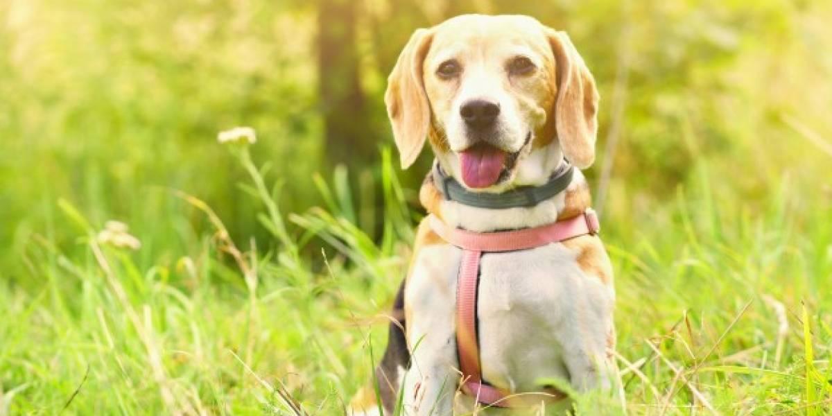 Estudo revela em qual idade os cães ficam mais adoráveis
