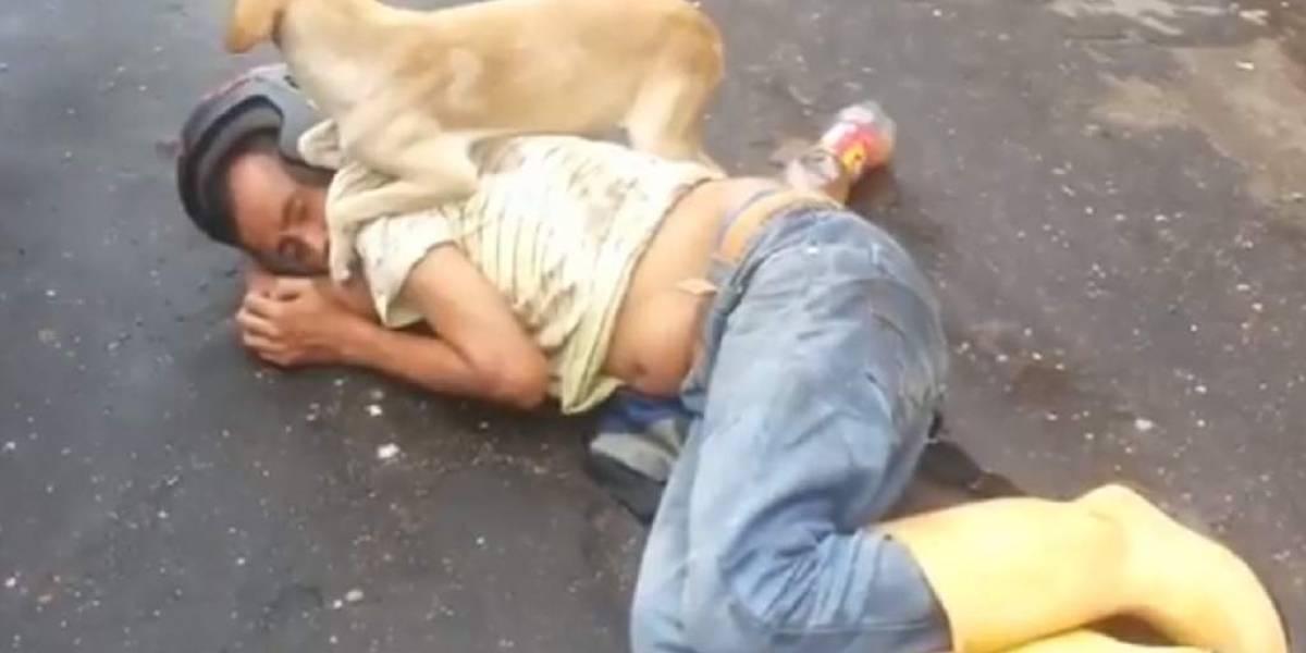Amigo fiel: vídeo de cachorro que protege dono alcoolizado se torna viral nas redes sociais