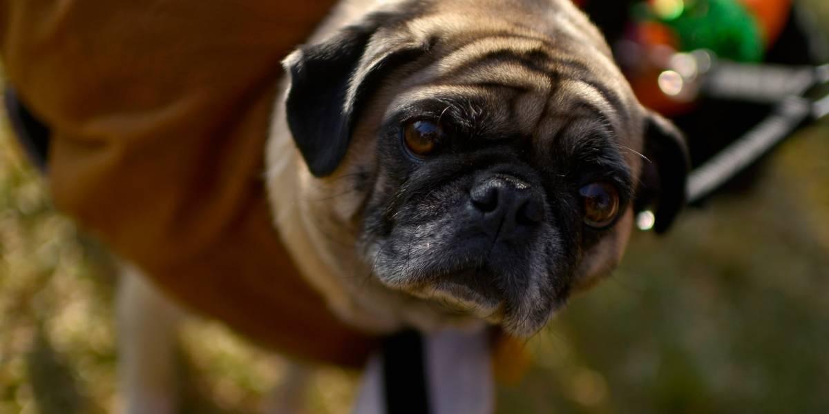 La verdad de la cadena que advierte en redes sociales del sacrificio de 236 perros en Bogotá