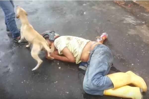 perro cuida borracho