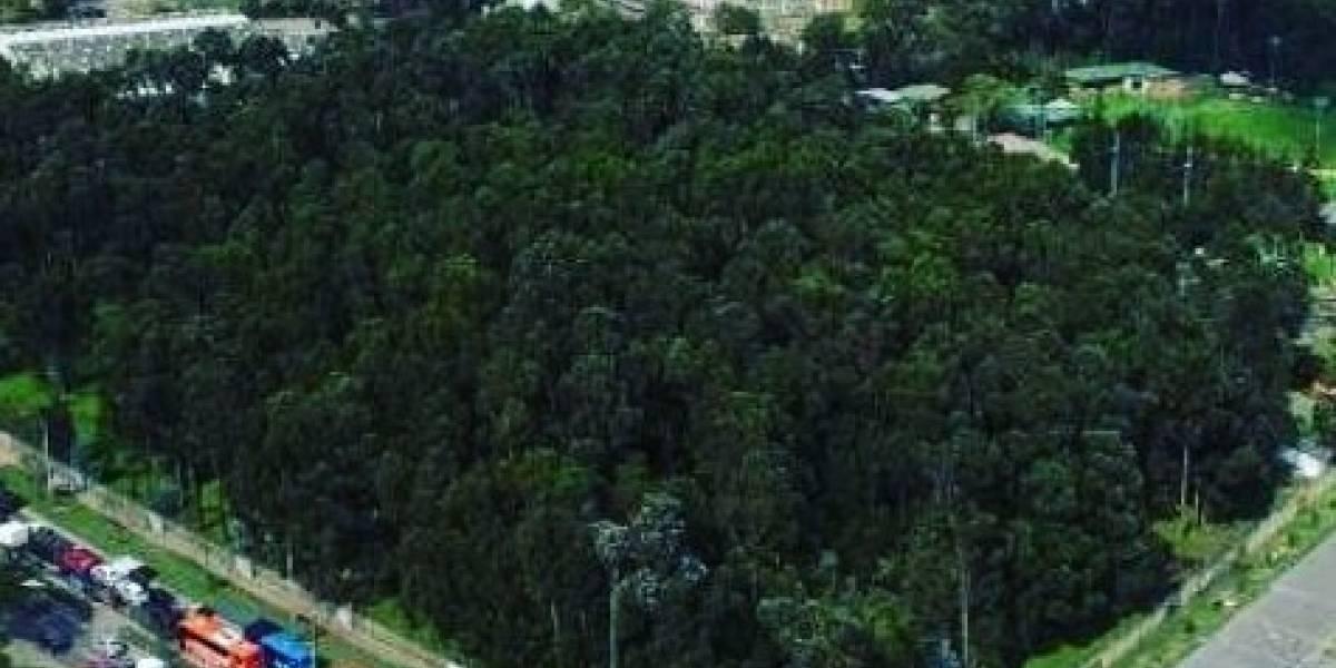 Denuncian nueva tala de árboles en el Bosque Bavaria, en Kennedy