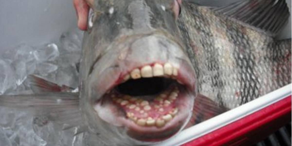 Las fotos de criaturas extrañas publicadas en Facebook que generan revuelo en las redes