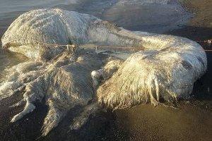 Habitantes de filipinas encontraron una criatura llena de pelo y sin vida en las orillas de la playa.