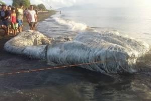 Criatura peluda impacta a ciudadanos de una playa de Filipinas
