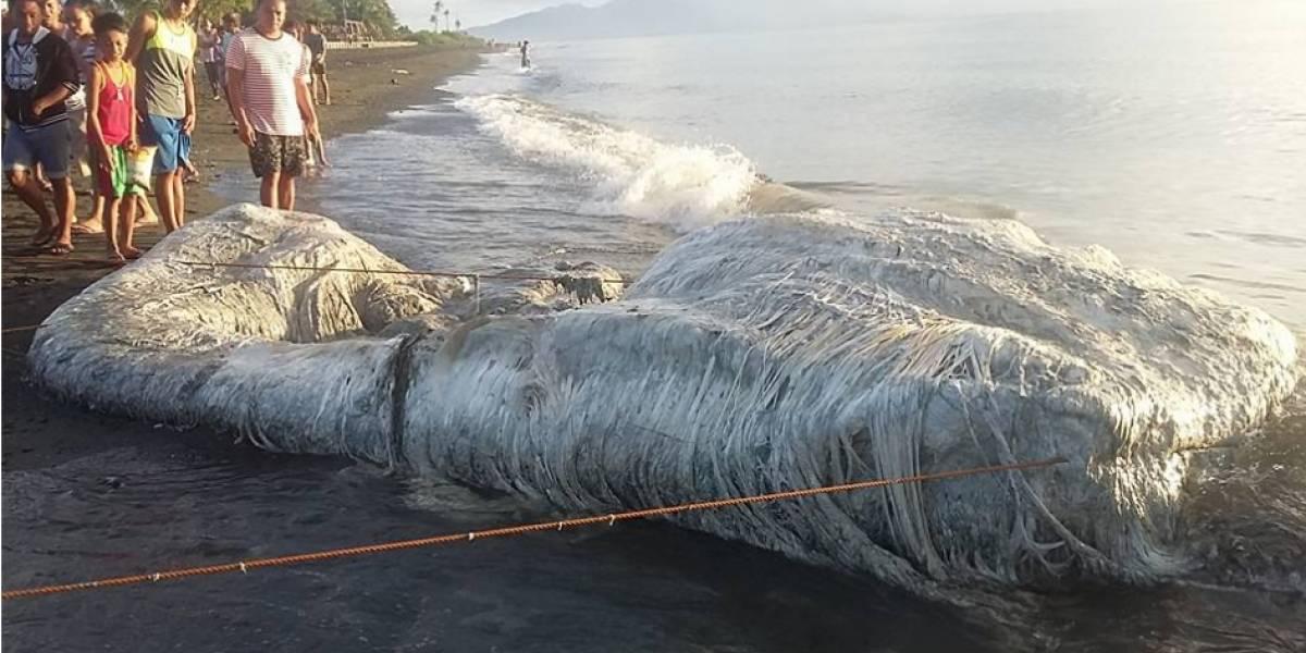 Una extraña y maloliente criatura es hallada en el mar