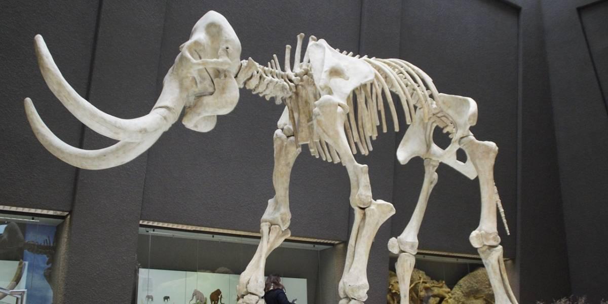 Se descubrieron restos la Edad de Hielo en México, mamuts y otros animales gigantescos