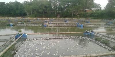 Muerte de peces en laguna en Retalhuleu