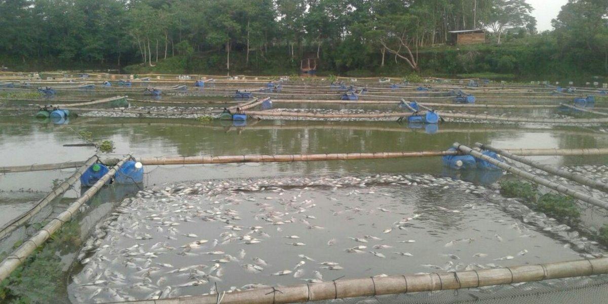 Detectan posible causa de mortandad de peces en Retalhuleu