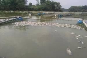 Insecticida pudo causar muerte de peces