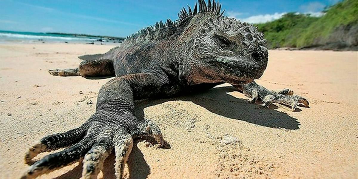 Galápagos: Turistas deberán contar con seguro de salud