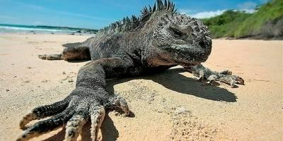 Seguro médico será requisito para ingresar a Galápagos