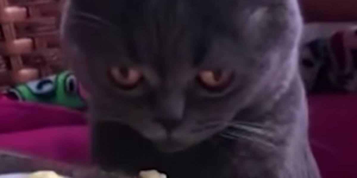 Video: Gato se desmaya tras oler una fruta y se vuelve viral
