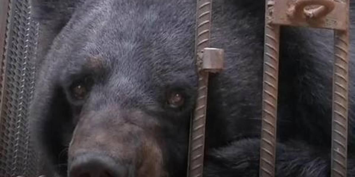 Família adota cachorro e depois descobre que estava criando um filhote de urso