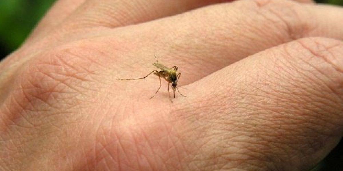 Personas temen salir a la calle por invasión de mosquitos