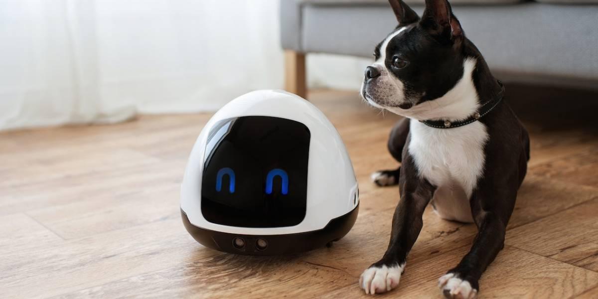 Este robot cuida a tu mascota mientras estás fuera de casa