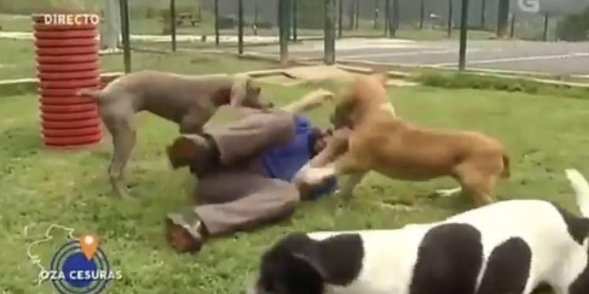 Épico momento televisivo: entrevista a cuidador de centro de rescate de perritos triunfa en las redes sociales por lo que pasaba a sus espaldas