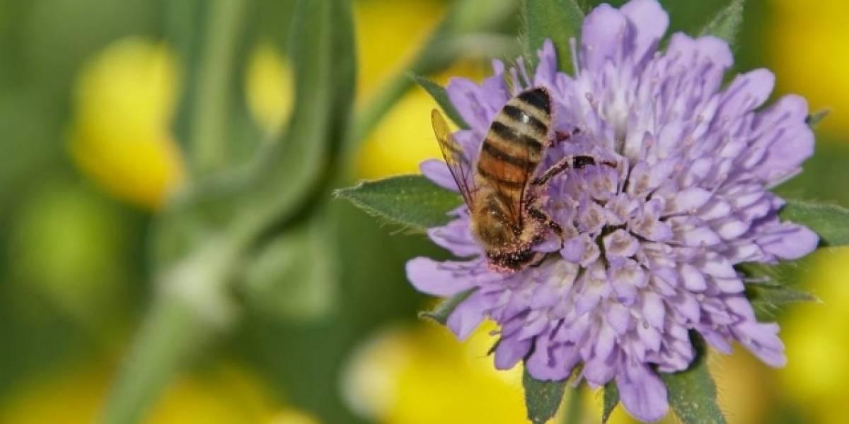 Abelhas estão ficando viciadas em pesticidas; entenda como isso contribui para escassez de alimentos
