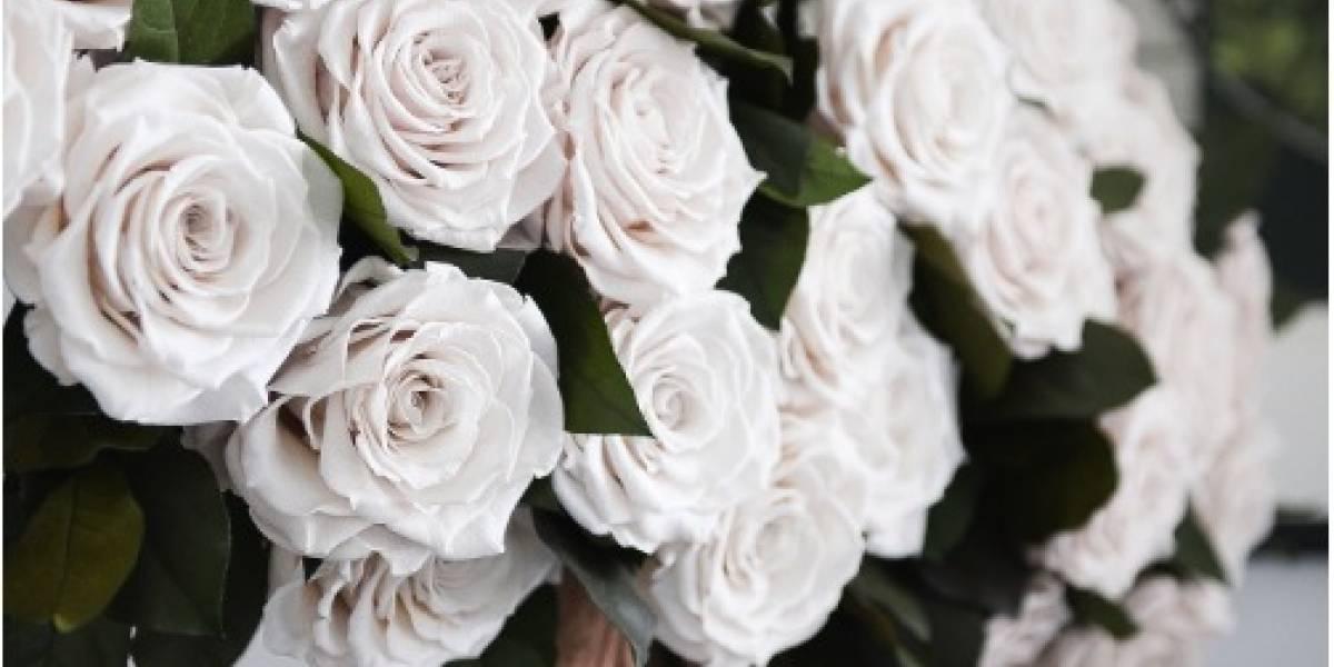 60 mil rosas ecuatorianas engalanarán detalles más finos de la boda real