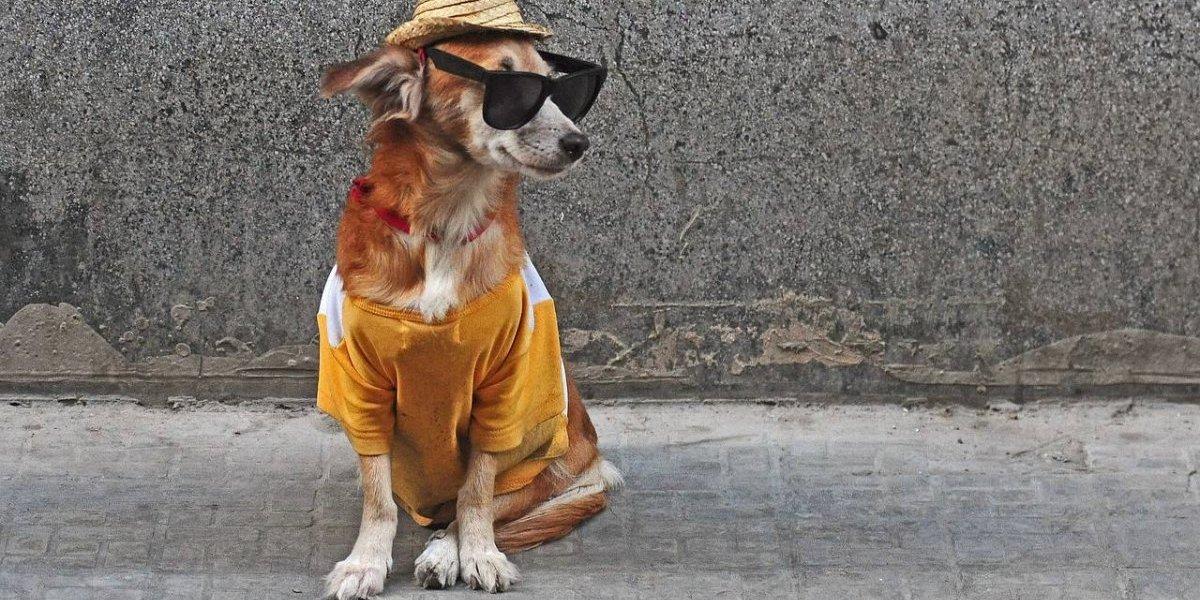 Colina quiere evitar que perritos se vuelvan callejeros: implantarán 5 mil microchips gratuitos