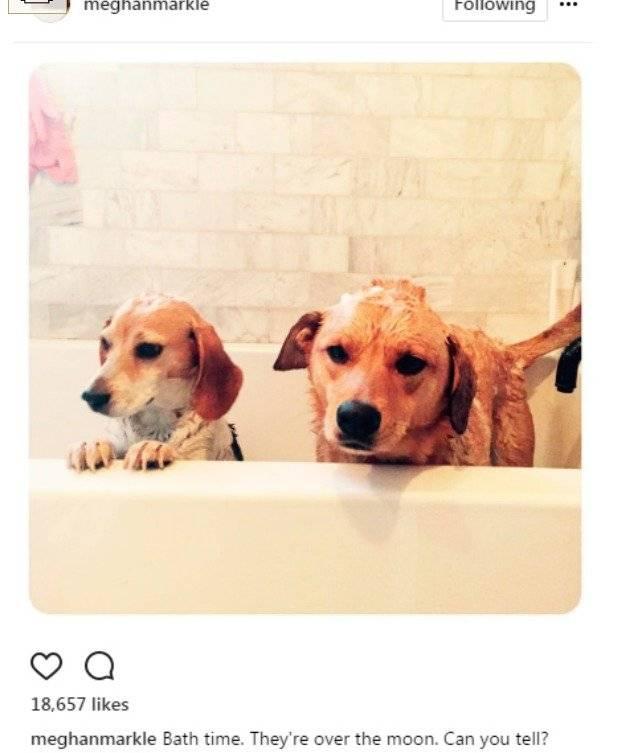 Meghan Markle y su perrito Instagram