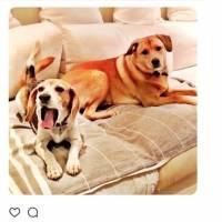 Meghan Markle y su perrito