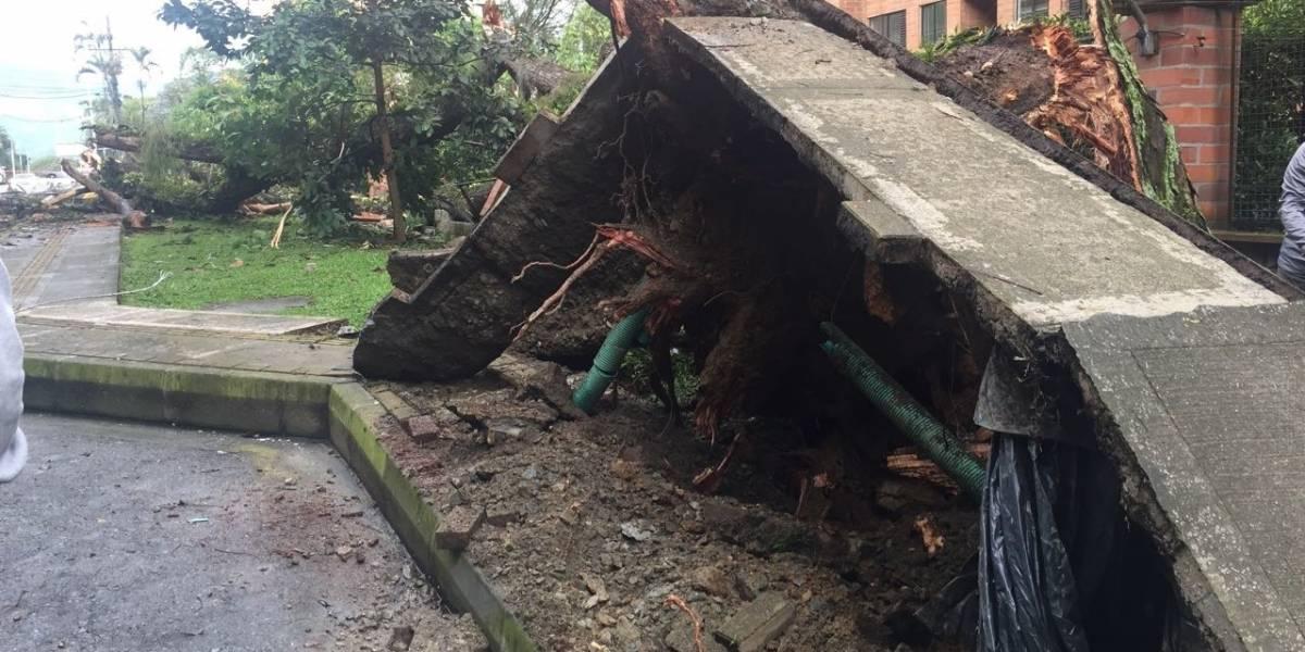 ¡Impresionante! árbol gigante se cayó y levantó el anden en la Transversal Superior
