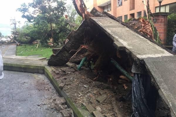 Árbol caído en Medellín - Cortesía Guardianes de Antioquia